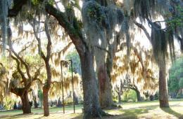 Savannah, Georgia Accessible Travel Tips & Attractions