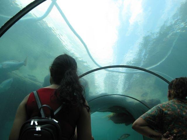 Atlantis Aquarium 2