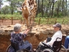 giraffe feeding centre