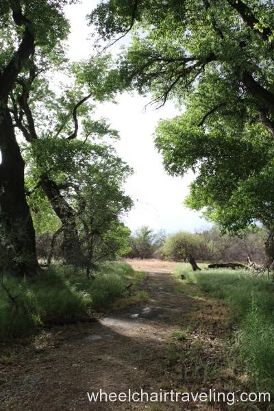 20_Canopy Trail.JPG