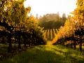 sonoma_wine_10