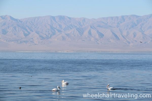 9_Pelicans in Salton Sea.JPG