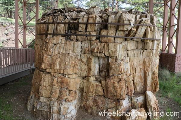 08_Petrified Tree Stump