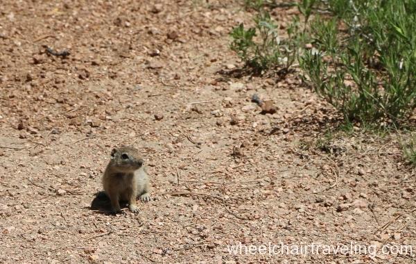 14_Squirrel on Trail
