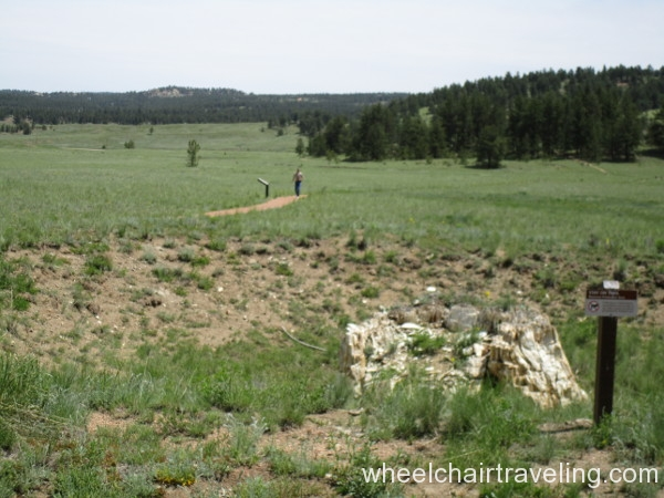 16_Petrified Trees Trail