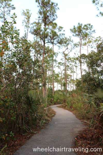 12_Pinelands Trail
