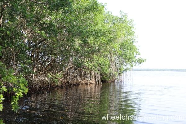 31_Boat Tour_ Mangroves at Coot Bay