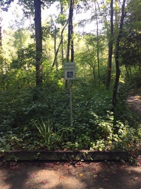 Amicalola-river-trail-20