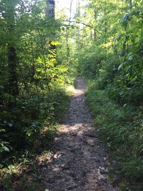 Amicalola-river-trail-22