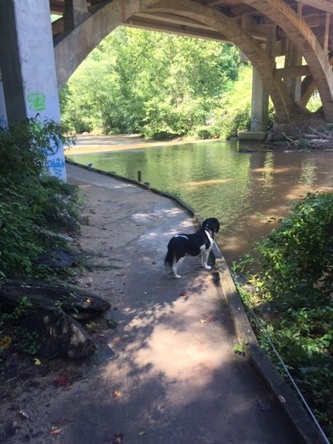 Amicalola-river-trail-26