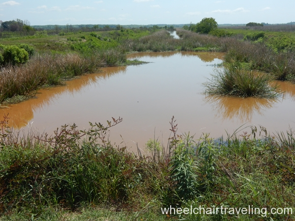 savannah_ga_wetlands_refuge_2016_wt_alo_13