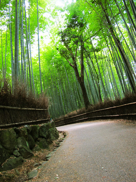 Bamboo Grove in Kyoto