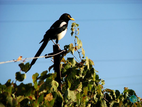 livermore_wine_country_10