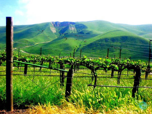 livermore_wine_country_20