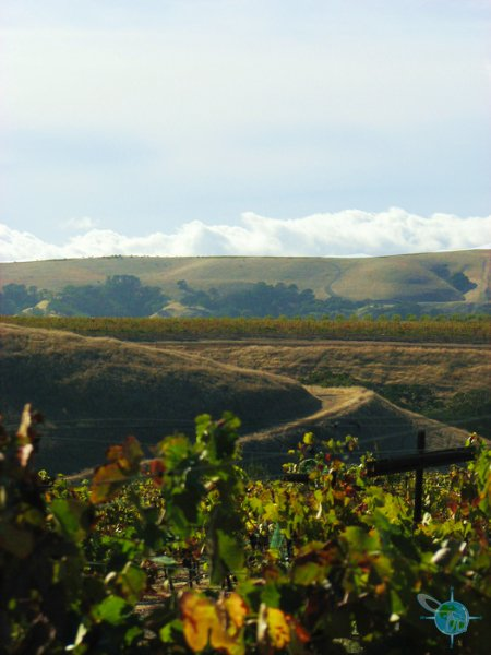 livermore_wine_country_23