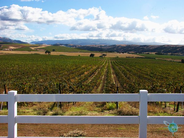 livermore_wine_country_26
