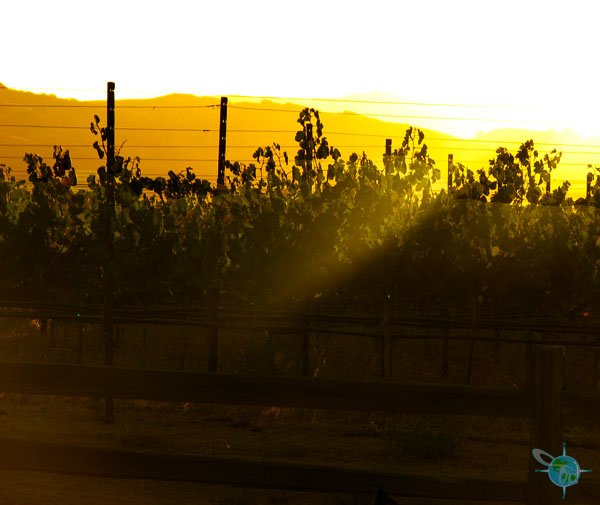 livermore_wine_country_8