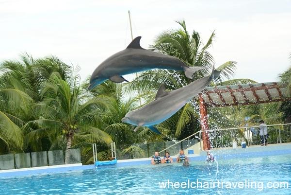 mexico_2015_dolphins_alo_wt_8