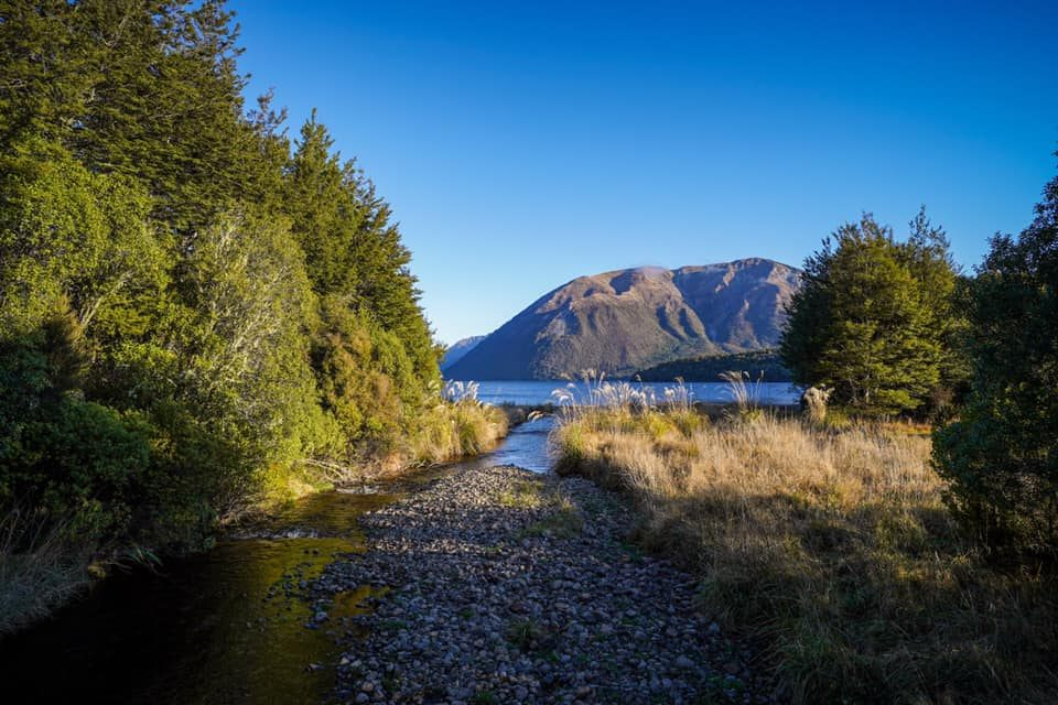 Lake-Rotoiti-Bellbird-Walk
