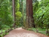 henry-cowell_small