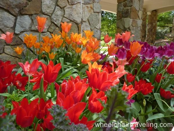 02_Tulips