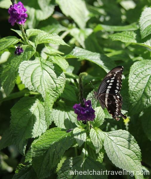 20_Butterfly Exhibit