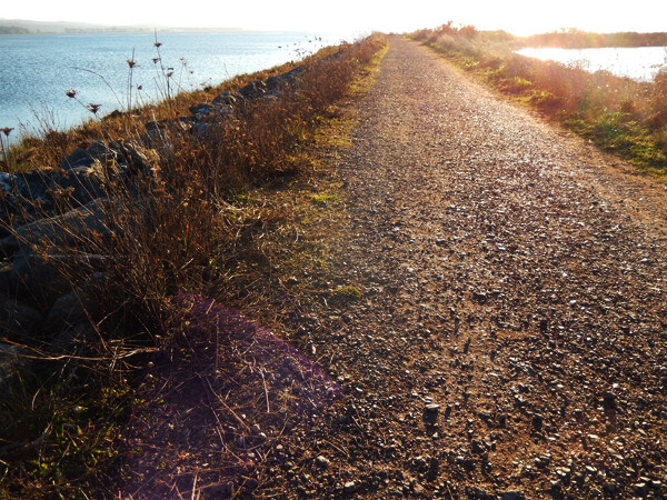 California Coast: Arcata Marshland Trails Access