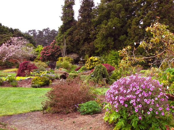Mendocino Coast Botanical Gardens on the CA Coast