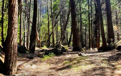 Stay in Charming Murphys in Northern California