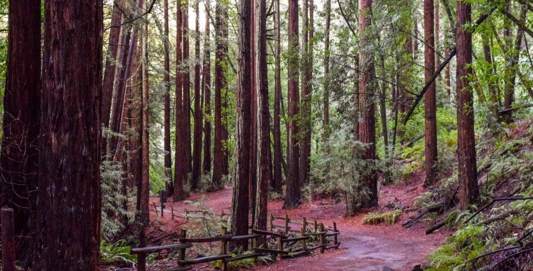 Oakland, California: Redwood Regional Park