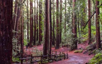 Oakland, California: Redwood Regional Park