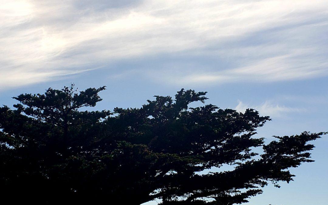 California Coast: Point Lobos State Marine Reserve
