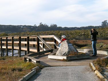 CA, Monterey Bay Area: Elkhorn Slough