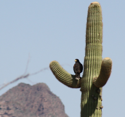 Arizona: Organ Pipe Cactus National Monument