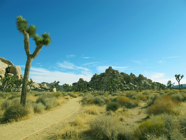 Joshua Tree National Park Accessibility Guide