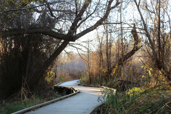 Big Morongo Canyon Preserve in Southern California
