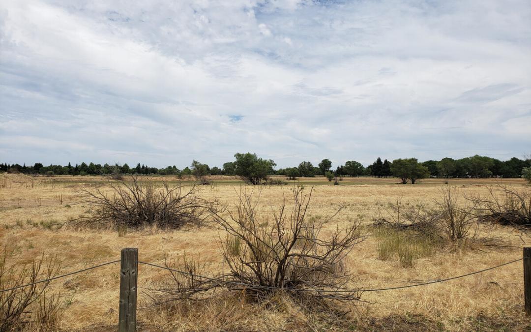 Elk Grove, CA: Laguna Creek Area Trails